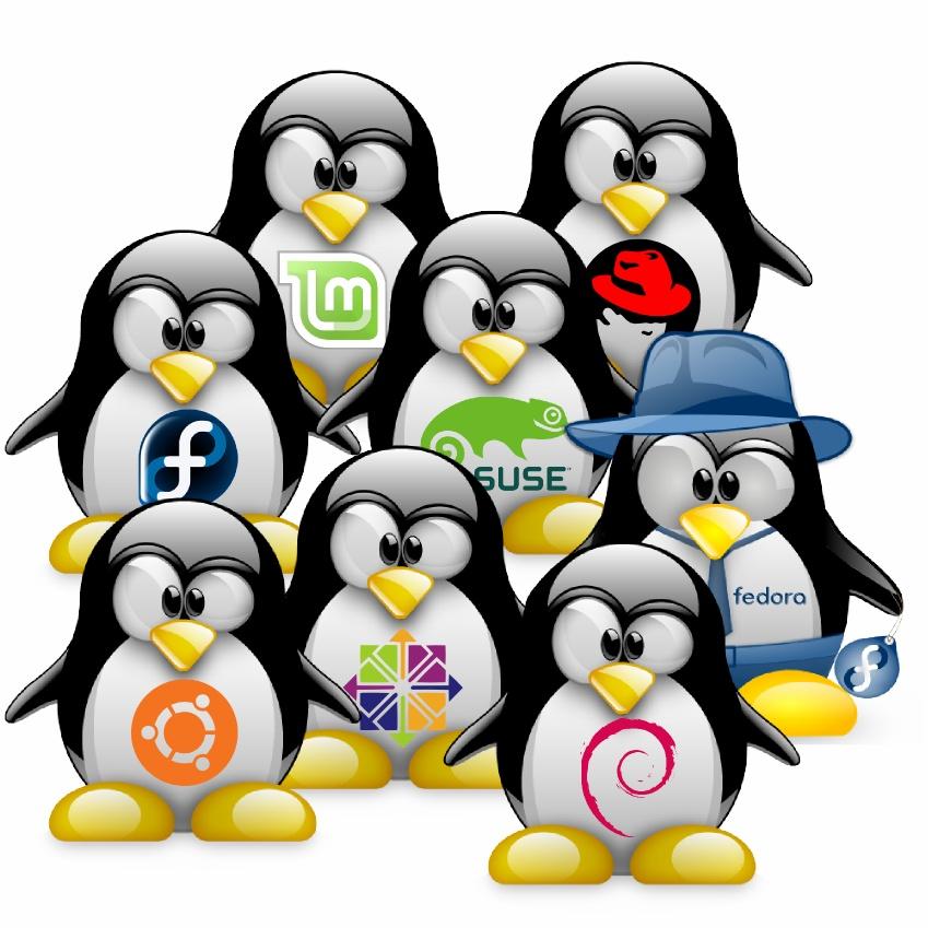 pingouinslibres