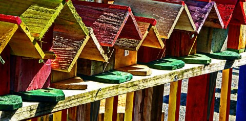 row-of-bird-houses