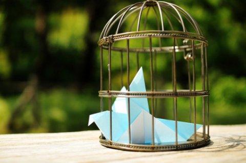 En faisant prévaloir le droit des bases de données sur la réutilisation des informations publiques, le tribunal administratif de Poitiers risque de mettre tout le mouvement d'ouverture des données publiques en cage...(L'Oiseau bleu_Bird cage_04. Par ajari. Cc-BY. Source : Flickr)