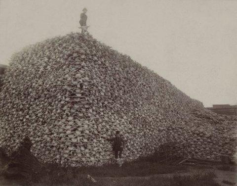 1280px-bison_skull_pile_edit